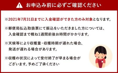 大村産 梨 大玉 10~11玉 5kg 幸水 豊水 秋月 新高
