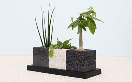eco-pochi世界初の消臭グリーン観葉植物