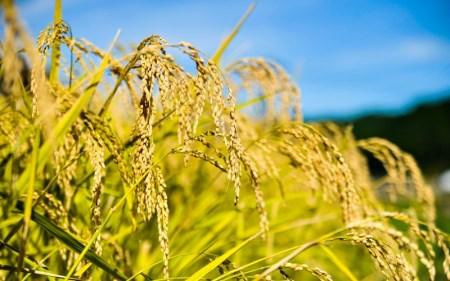 <無くなり次第終了>令和元年度産 南小国町のお米あきげしき 5kg