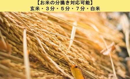 ◆【令和元年産・新米】ミルキークイーン 10kg