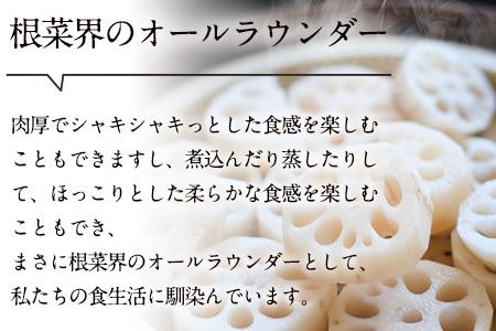 レンコン 約5kg 熊本県氷川町産 道の駅竜北《8月下旬-9月末頃より順次出荷(土日祝除く)》
