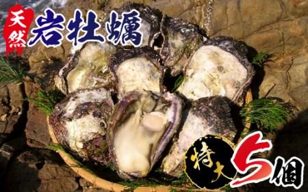 A906 延岡産天然岩牡蠣(生食用)特大サイズ5個(2019年4月から発送開始)