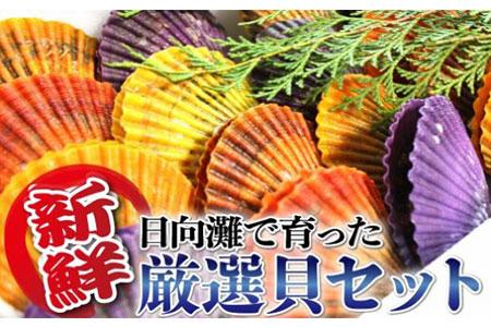 B207 貝類Eセット