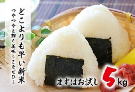 A19-191 【超早場米】日南産新米こしひかり(5kg)