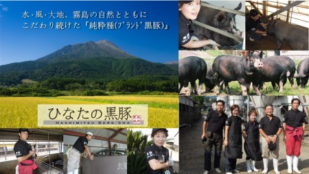 【自家生産】ひなたの黒豚骨付きスペアリブ(2.2kg程度:はしみつバーク舎)