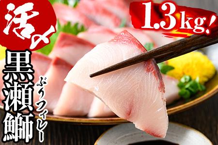 AR-B1 活じめ!黒瀬ブリの生鮮ブリフィレー(1.3kg)刺身や煮物、焼き物等の料理に♪【南郷包装】