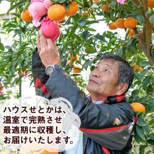 AD-AB1 <訳あり>農林水産大臣賞受賞農園!ふるやさんちの温室せとか(約5kg・20~24玉※サイズ混合)【ふるやさんちのみかん園】