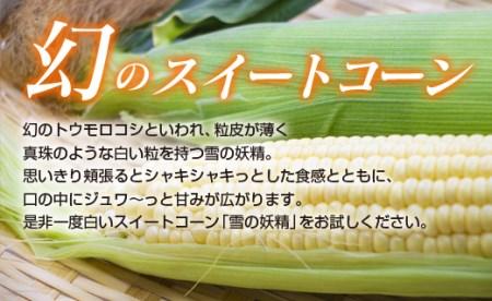 西都産 白いスイートコーン【雪の妖精】約5kg<1.2-12>