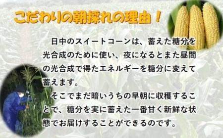 1-3 【先行予約】西都市産  ゴールドラッシュ  スイートコーン
