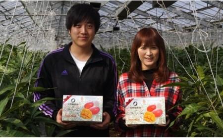 【数量限定】宮野原農園 宮崎県西都産スターズマンゴー(3Lサイズ2個入)<1.5-1>