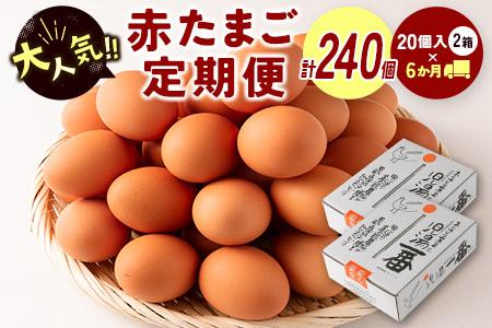 <児湯養鶏自慢の卵>計240個 (40個×6回) 6ヶ月定期便【D15】