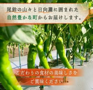 ZB7 《期間・数量限定》島田梅園の『とうがらしセット』約500g