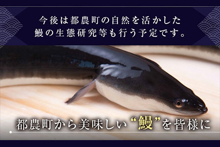 B15-e ★迫力満点★うなぎ蒲焼(長焼5尾入)【6月配送分】