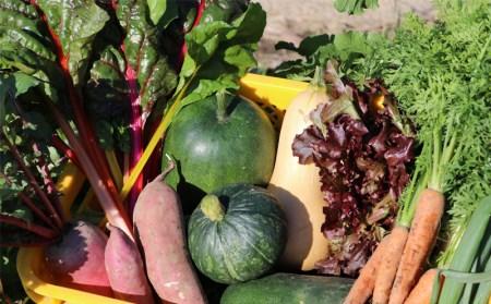 B2-3801/irodori野菜 もり畑の野菜詰合せ20