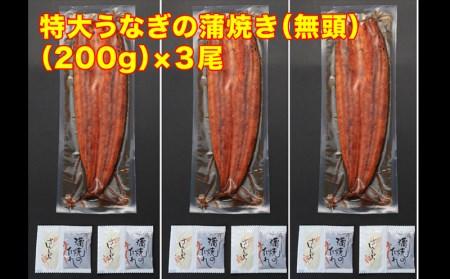 B2-0807/鹿児島県産特大うなぎの蒲焼き(無頭)200g×3尾