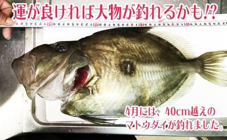 C3-2403/錦江湾で船釣り!海の幸満喫 日帰りプラン(1名様)