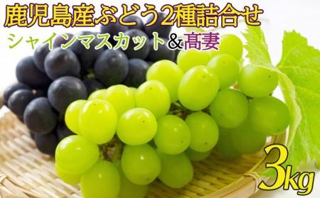 B2-0815/鹿児島産ぶどう2種詰合せ3kg(シャインマスカット・高妻)