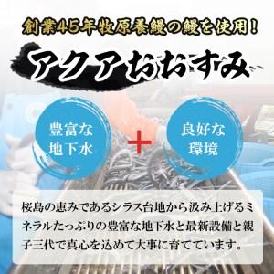 【22458】驚きのビッグサイズ 大隅産 うなぎ蒲焼 3尾