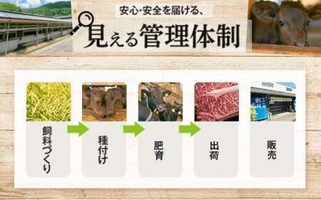 【A91018】鹿児島黒牛ビーフカレー 10パックセット