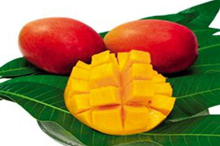 【2610-0403】当社直営農園で生産した美味しいアップルマンゴー 3L・2玉