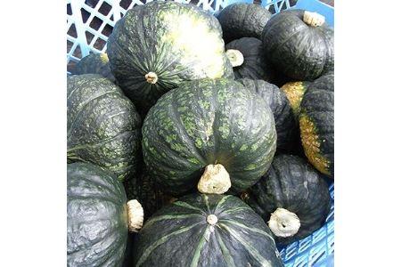 野菜王国 釧路町産 濃厚な味わい!【かぼちゃ】5kg【1084029】