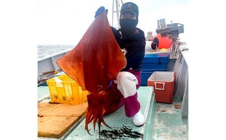 漁師直送!ソデイカ(セーイカ) 約1.2kg 海人のまち糸満