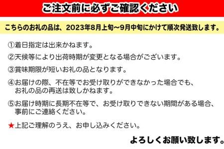 【2021年夏発送】豊見城産キーツマンゴー(大玉2玉)