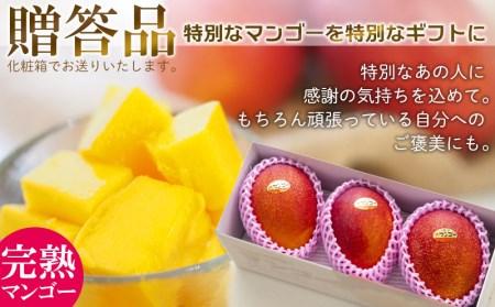 農園から直送!農園一番人気の完熟アップルマンゴー 秀品・約2kg【2021年発送】