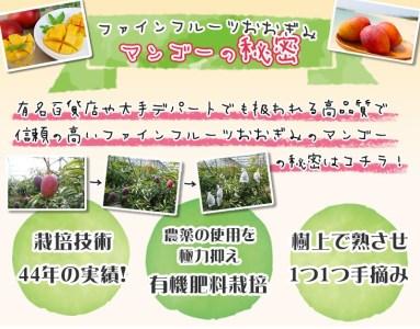 農園から直送!農園一番人気の完熟アップルマンゴー 秀品・約1kg【2021年発送】