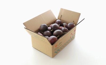 【2020年発送】本部町産情熱の果実(パッションフルーツ)家庭用(約1kg~1.2kg)