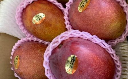 2020年発送マンゴーの拠点産地「宜野座村」のアップルマンゴー(家庭用)(1.5kg)