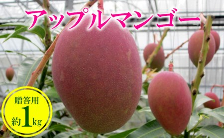 【2019年発送】農家さん直送!アップルマンゴー約1kg 贈答用