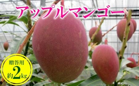 【2019年発送】農家さん直送!アップルマンゴー約2kg 贈答用