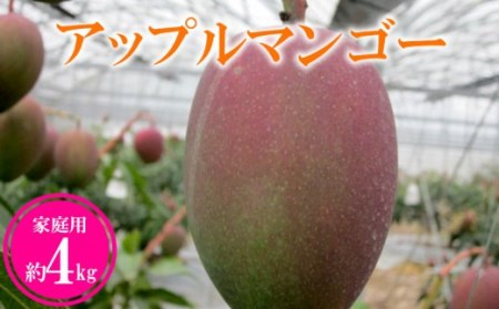 【2019年発送】農家さん直送!アップルマンゴー約4kg 家庭用