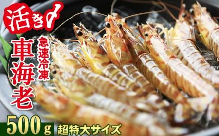 【2020年1月~発送】活き〆急速冷凍車海老:超特大500g
