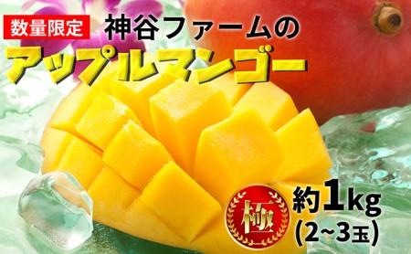神谷ファームのアップルマンゴー(極)約1kg(2~3玉)