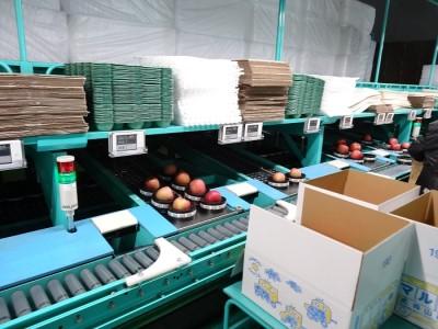 2月  サンふじりんご「特A」約3kg 糖度13度以上 平川市産(8~10玉)