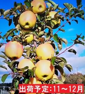 11~12月 【訳あり】キラ農法 完熟りんご ぐんま名月約5kg