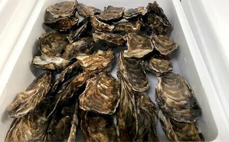 10-248 生牡蠣 大~特大サイズ 約2.8kg(20~25個入)【年内発送の受付は終了いたしました。1月中旬以降のお届けとなります。】