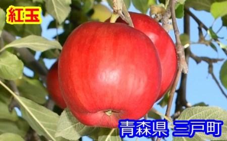 りんご【紅玉】20~28玉 約5kg【2020年産】