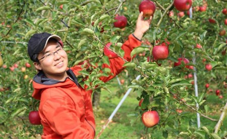 RT886 あんじょう農園の米崎りんご【贈答用ふじ5kg】