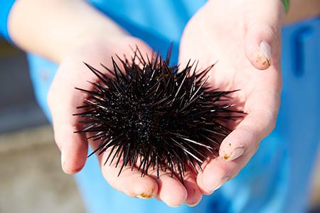 RT938 広田湾漁協からお届け!焼きウニ2個