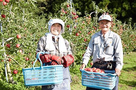 RT668 ご家庭用米崎りんご品種おまかせ3㎏【9~10月発送】