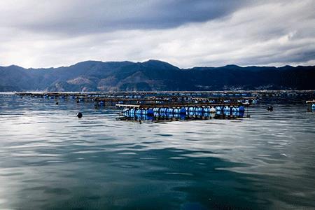 RT951 かき小屋広田湾の冷凍むき身牡蠣300g×2袋【加熱用】