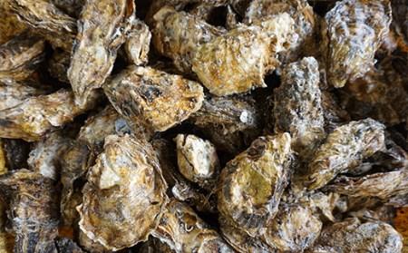 RT960 鈴木さんのむき身牡蠣MとL食べ比べ1kg