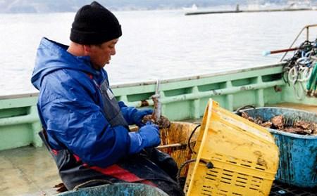 RT246 【2021年冬/予約受付】牡蠣のガンガン焼きとむき身セット