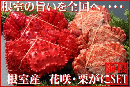 FA-19005 北海道根室産 花咲ガニとクリガニの食べ比べ4~5尾(計1.2kg前後)