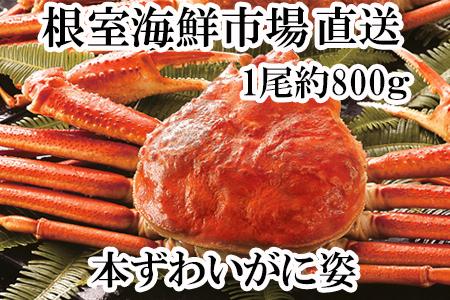 根室海鮮市場<直送>ボイル本ズワイガニ姿約800g×1尾 A-28067