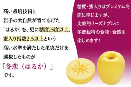 【予約】 F-H岩手県産「冬恋」はるか約2.5kg【冬恋研究会(JAいわて中央)】