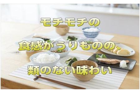 【令和2年産】宮城県 栗原産 「だて正夢」一等米限定 白米 5kg